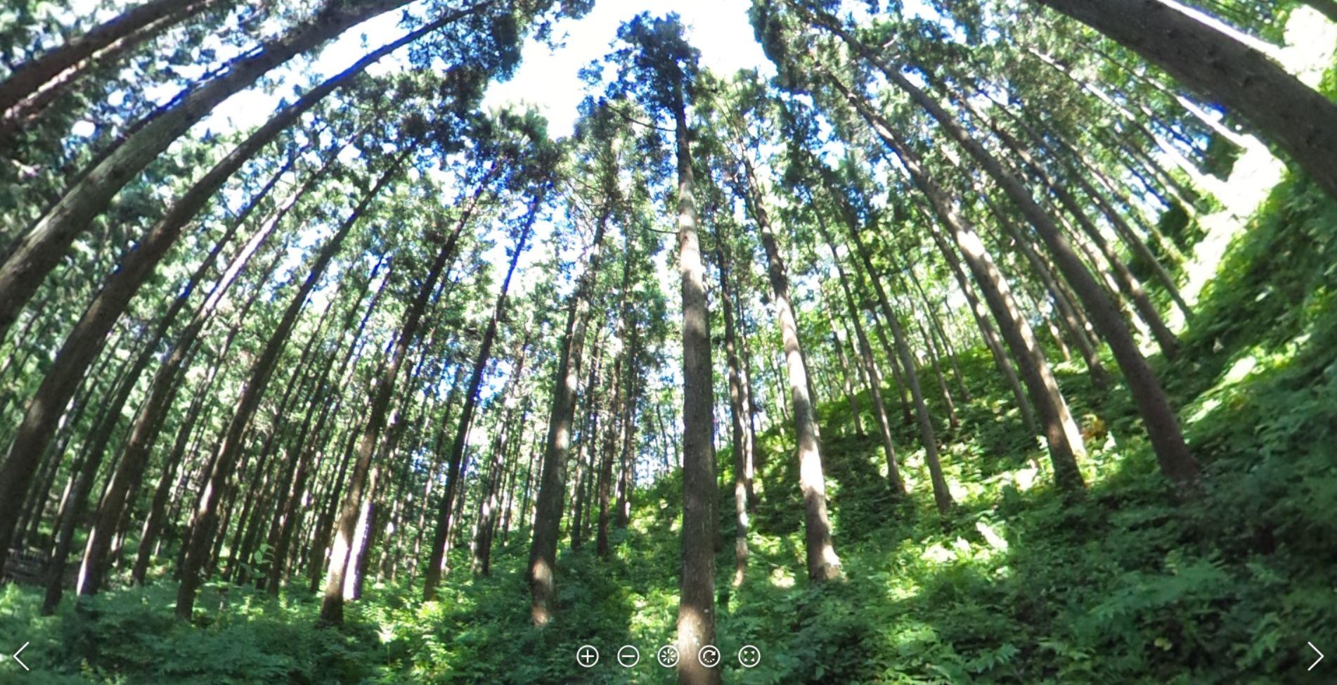 スマート林業ソリューション
